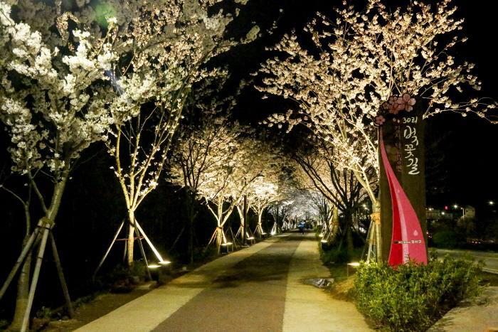 江西 桜祭り