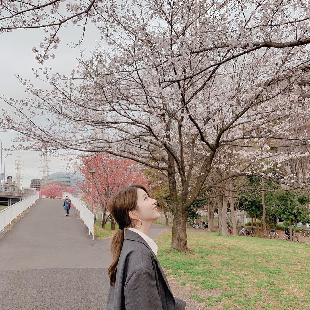 GFRIEND 桜