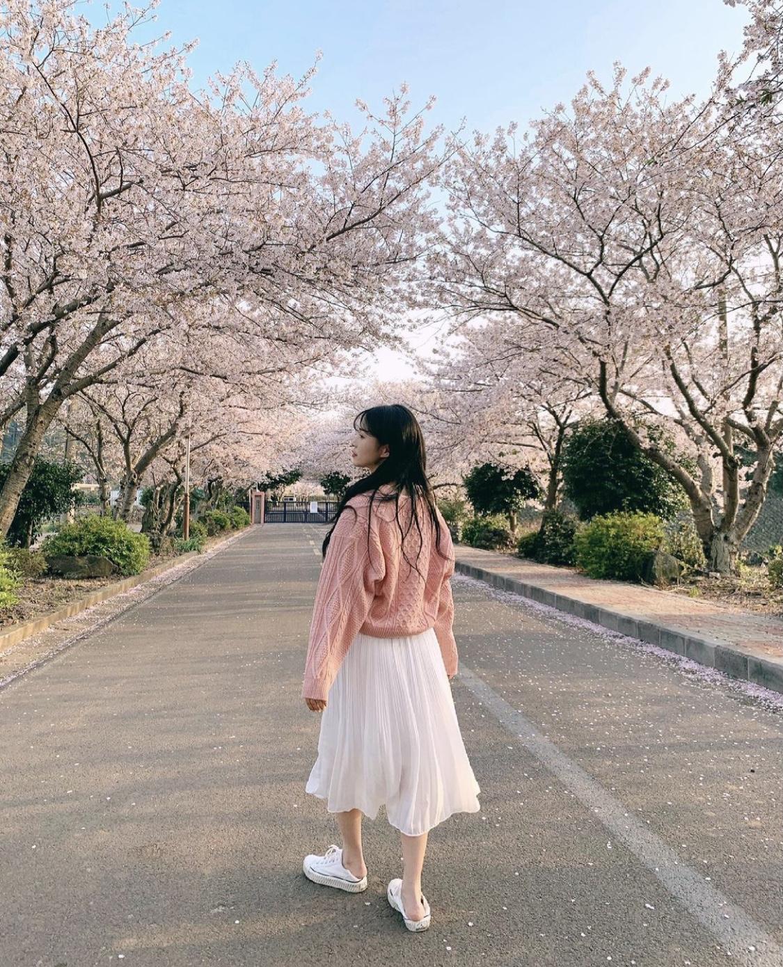 桜ショット 後ろ姿